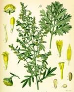 absinthe phytothérapie