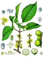 guttier phytothérapie