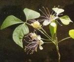 varuna phytothérapie